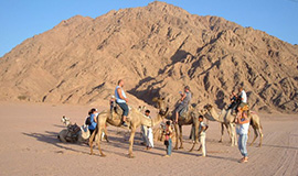 Camel Ride And Bedouin Tea in Sharm